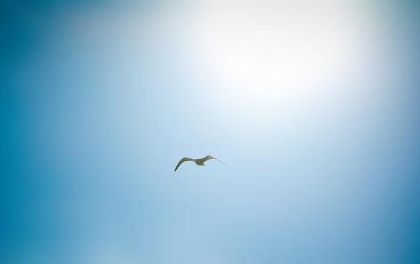 Фото обои небо, солнце, птицы, фото, птица, пейзажи, full hd