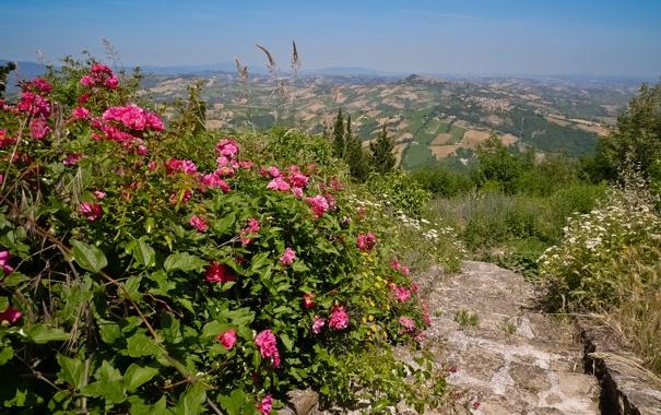 Фото обои лестница, италия, поля, цветы