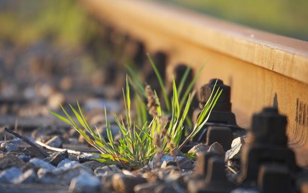 Фото обои трава, макро, пути, путь, камни, фото, обои