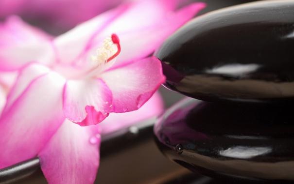 Фото обои камень, цветок, спа, капля, камни
