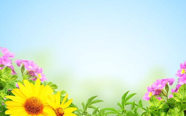 Фото обои подсолнухи, цветы, лепестки, розовые цветы