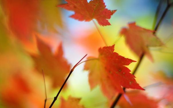 Фото обои листья, макро, природа