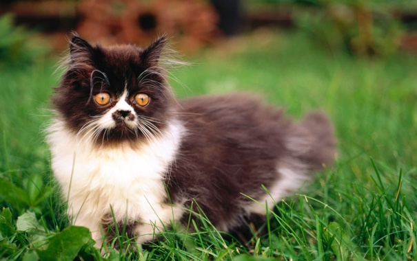 Фото обои трава, кот, лужайка