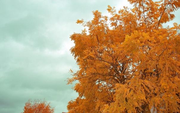 Фото обои осень, небо, дерево
