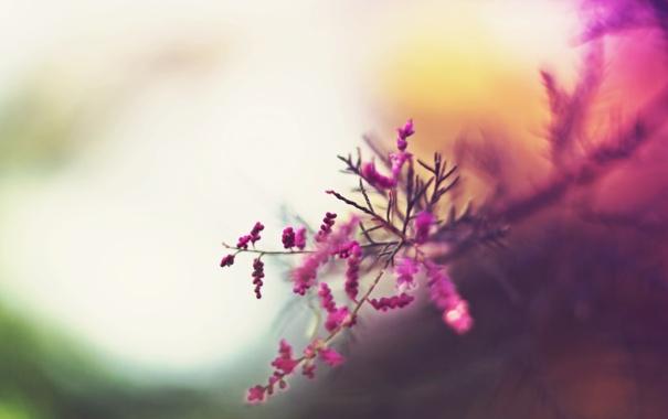 Фото обои осень, деревья, цветы, абстракция