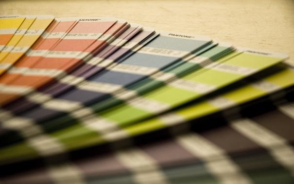 Фото обои макро, разноцветные, цветовой веер