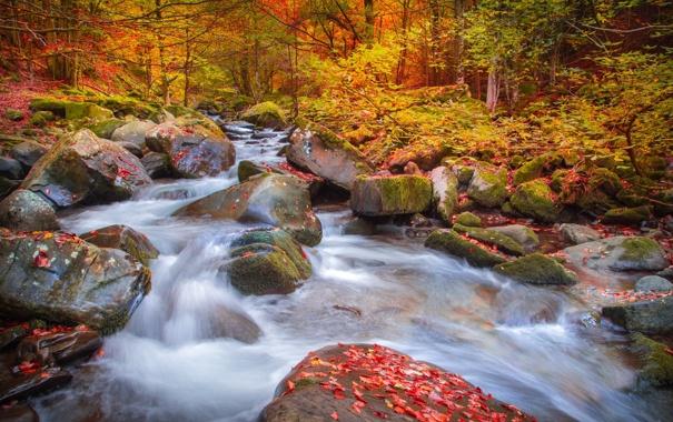 Фото обои осень, лес, природа, река