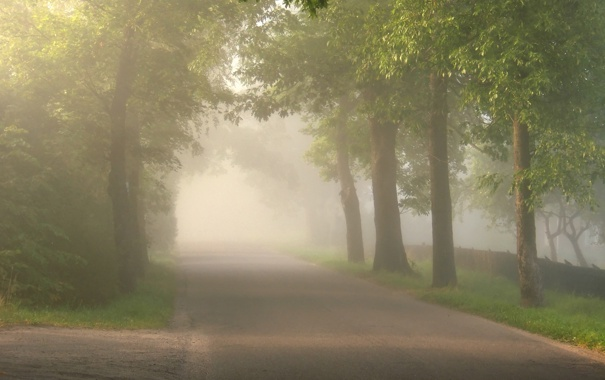 Фото обои дорога, деревья, природа, фото, дерево, пейзажи, дороги