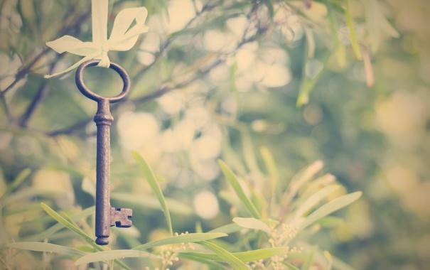 Фото обои зелень, лето, ключ, лента