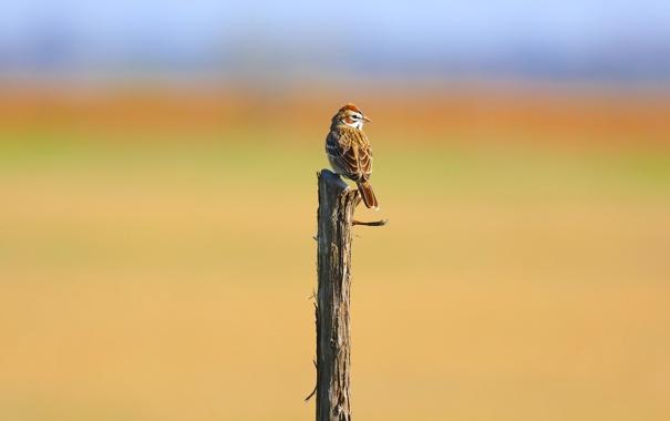 Фото обои птица, назад, воробей, боке, глядя, филиал