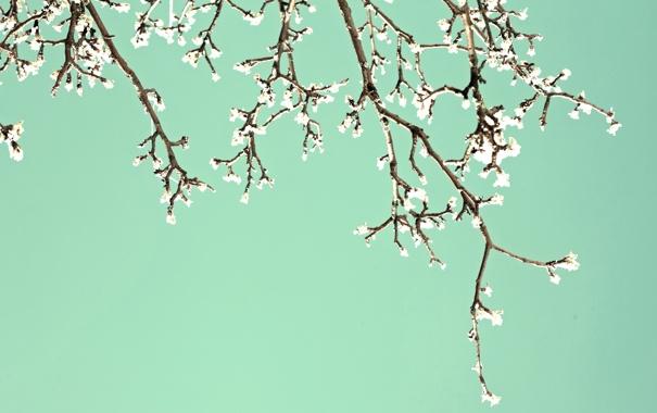 Фото обои цветы, ветви, весна, сад, цветение, blossom