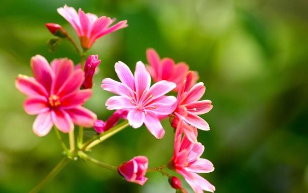 Фото обои макро, природа, растение, лепестки, соцветие