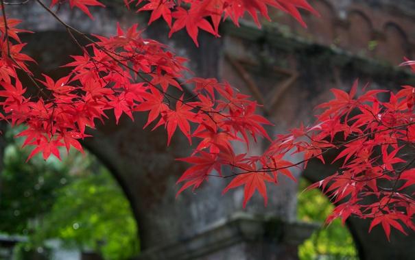 Фото обои осень, листья, мост, природа, ветка, арка