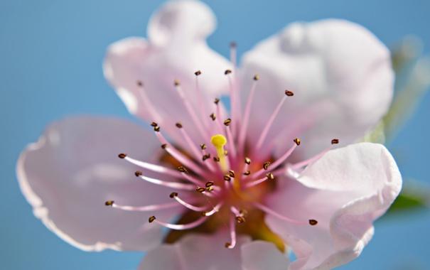 Фото обои цветок, небо, лепестки, сад, тычинки