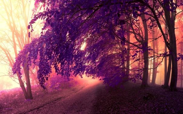 Фото обои дорога, осень, лес, листья, деревья, природа, парк