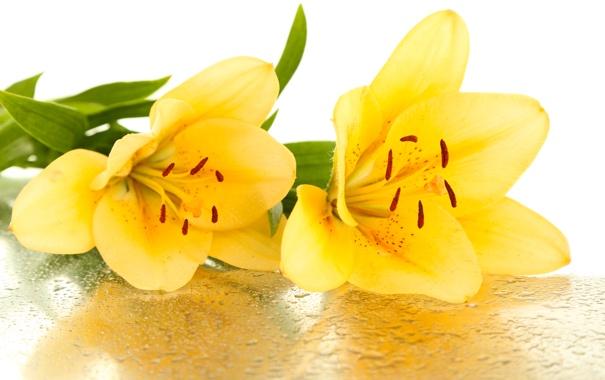 Фото обои цветы, капельки, лепестки, тычинки, flowers, листики, petals