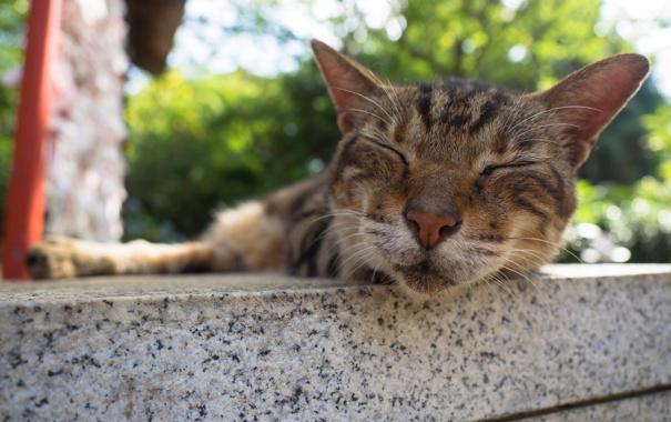 Фото обои кот, усы, фон, спит, моська