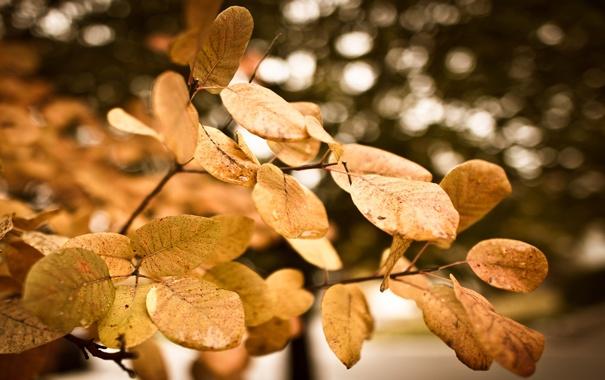 Фото обои вода, капельки, блики, листва, размытость, после дождя, листики