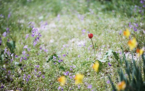 Фото обои трава, цветы, тюльпан