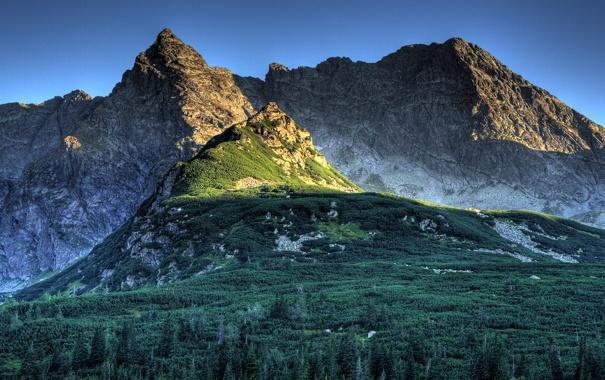 Фото обои лес, деревья, горы, природа, вершины