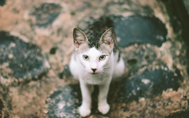 Фото обои глаза, кот, улица, лапы, уши