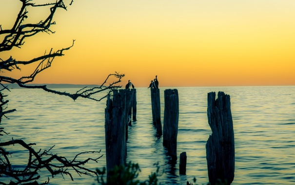 Фото обои пейзаж, закат, птицы, озеро