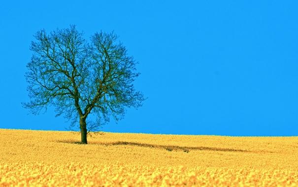 Фото обои поле, небо, природа, дерево, тень, весна, рапс