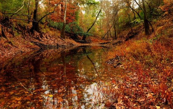 Фото обои лес, осень, пруд., деревья