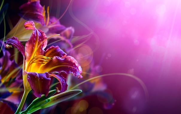 Фото обои цветы, лилии, изгибы, усики