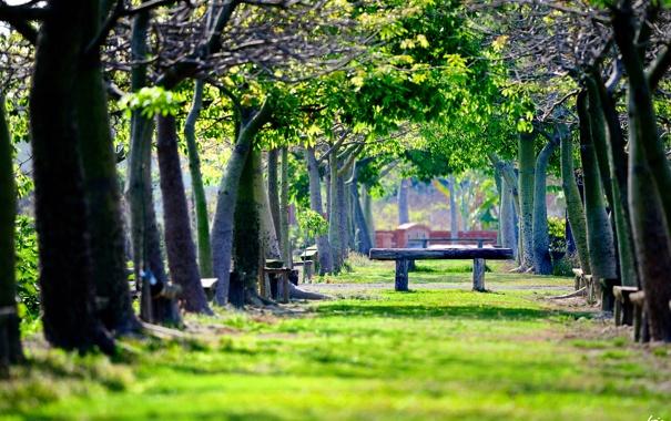 Фото обои зелень, парк, скамейки, лавочки
