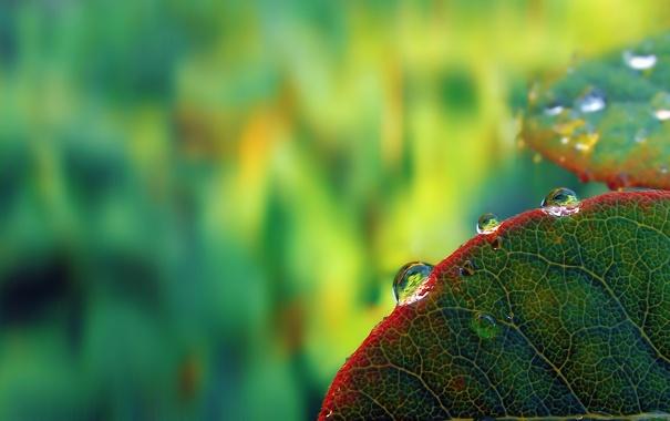 Фото обои макро, лист, капля