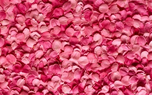 Фото обои фон, роза, лепестки