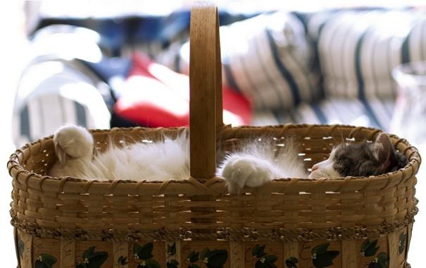 Фото обои кошка, фон, корзина