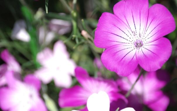 Фото обои цветы, природа, лепестки, сад, клумба