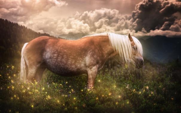 Фото обои лето, природа, конь