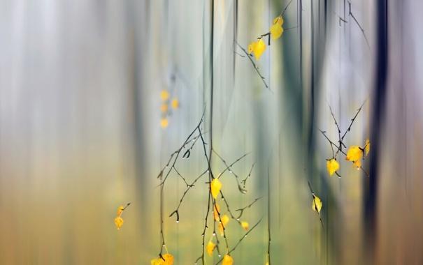 Фото обои осень, листья, ветки, природа, фон