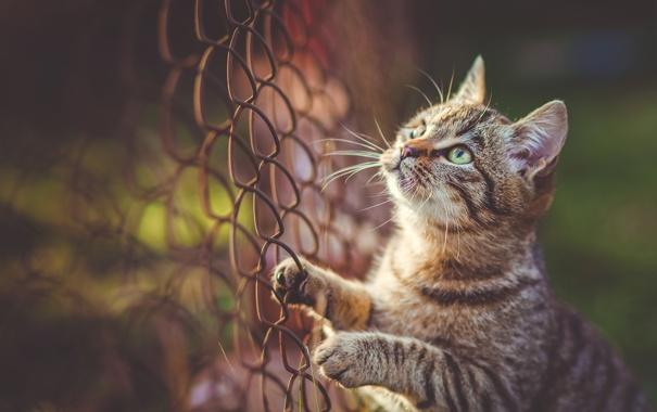 Фото обои кот, сетка, котэ