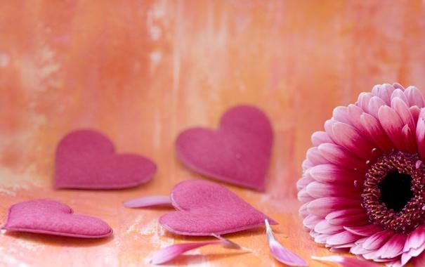 Фото обои цветок, цветы, фон, розовый, widescreen, обои, сердце