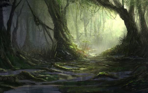 Фото обои лес, природа, река, болото, джунгли, jungle