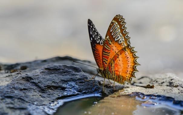 Фото обои природа, фон, бабочка
