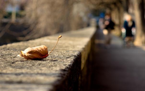 Фото обои город, лист, улица
