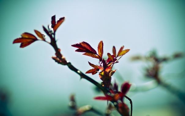 Фото обои листья, весна, грусть, куст