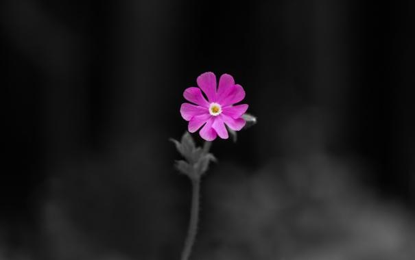 Фото обои цветок, макро, фото, фон