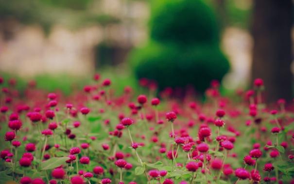 Фото обои поле, цветы, природа, обои, поляна, картинки, растения