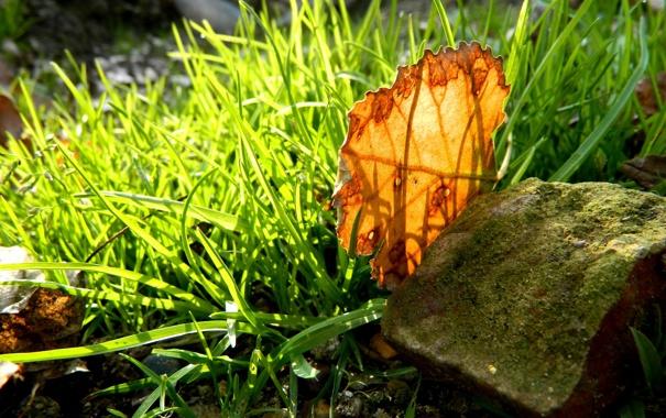 Фото обои трава, макро, оранжевый, желтый, природа, лист, green