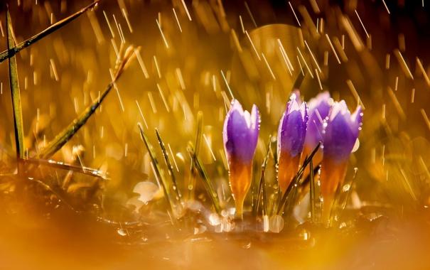 Фото обои цветы, природа, дождь