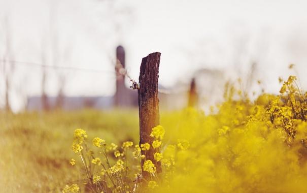 Фото обои лето, цветы, природа, забор