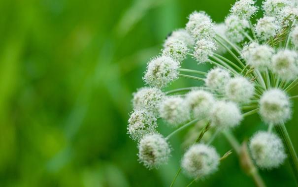 Фото обои трава, макро, природа