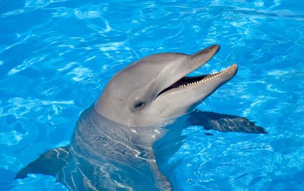 Фото обои вода, дельфин, улыбка, танец
