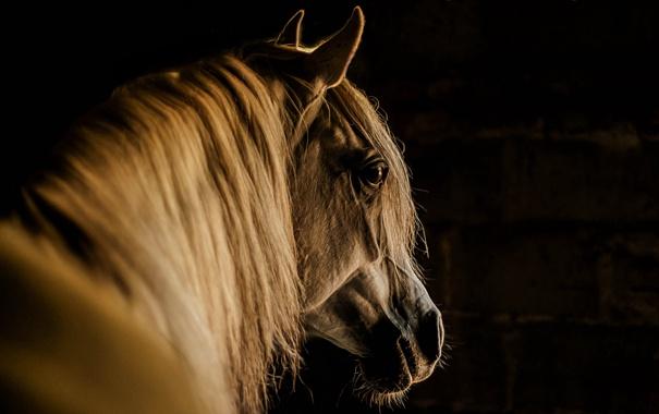 Фото обои фон, морда, конь